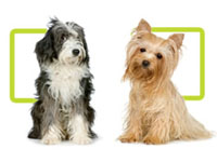 Dermagic Skin Care For Dogs